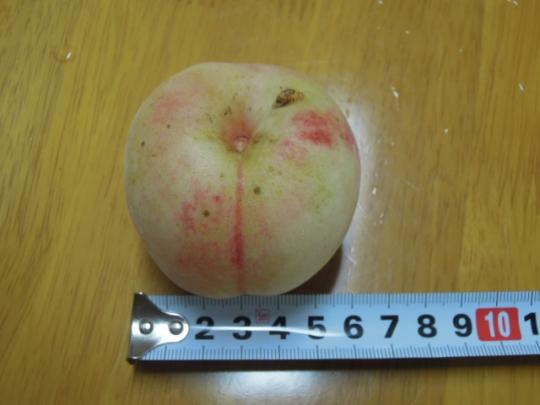 黄金桃の大きさ