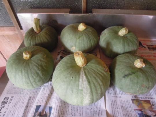 東京南京の収穫 H2608