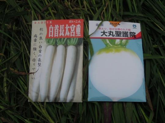 秋大根の種 H2608