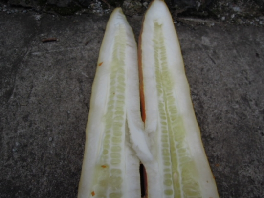きゅうりの種取り3 H2608