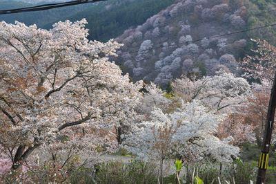 yosino201404009_Rb.jpg