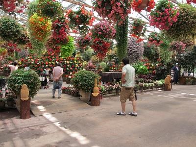 見事な花と観葉植物さんたち