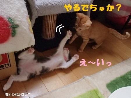 20140608_10.jpg