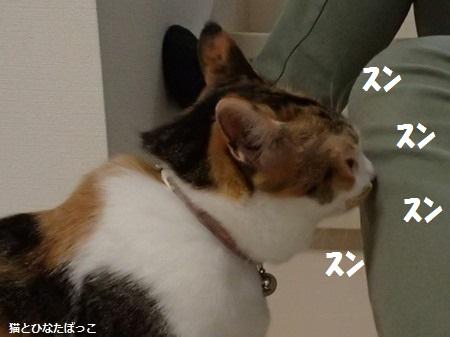 20140608_23_1.jpg