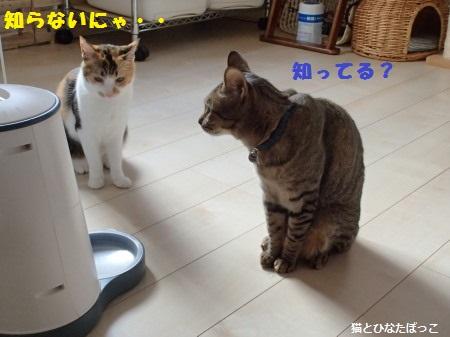 20140612_28.jpg