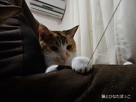 20140804_44_01.jpg