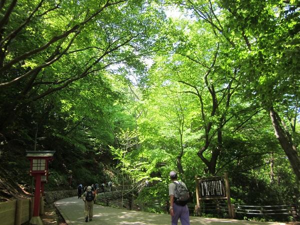 高尾山の新緑