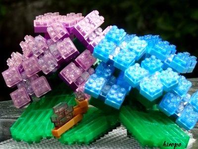 紫陽花2014A