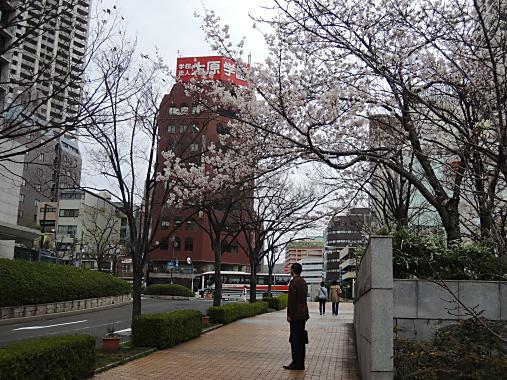 3月30日 桜