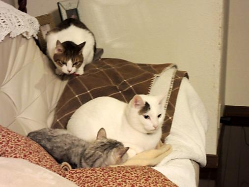 4月17日 猫トリオ