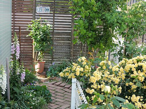 5月6日 東の庭