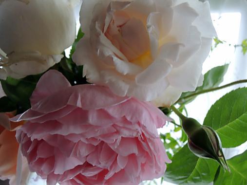 5月12日 切り花