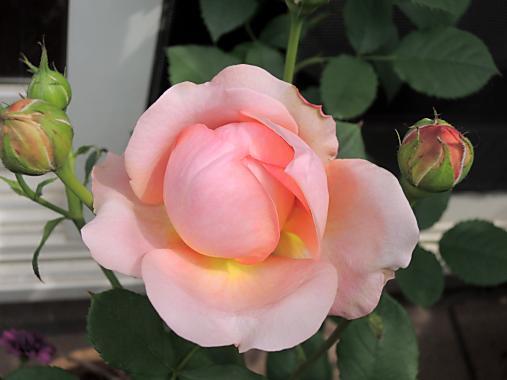 5月19日 プリンセス・アレクサンドラ・オブ・ケント