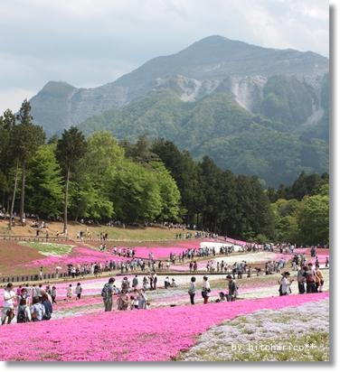 ぶこう山とお花畑