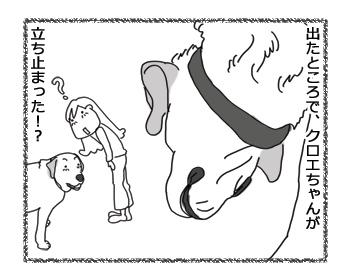 羊の国のラブラドール絵日記シニア!!「シニア!!」3