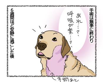 羊の国のラブラドール絵日記シニア!!「負け惜しみ」6