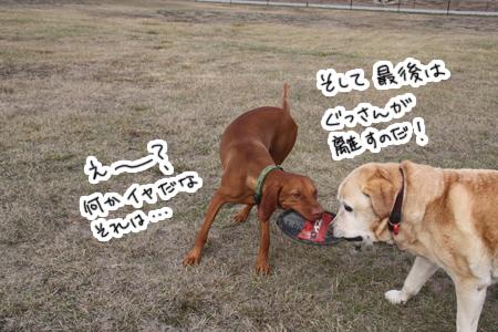 羊の国のラブラドール絵日記シニア!!「三犬三様」写真2