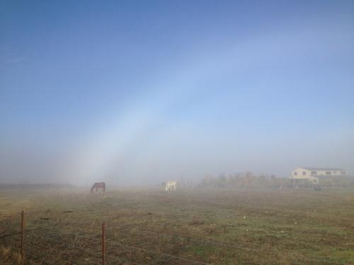 羊の国のラブラドール絵日記シニア!!「雲の中を散歩」3