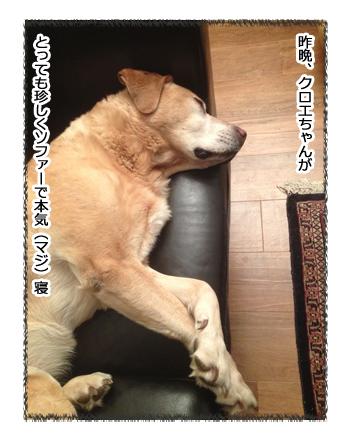 羊の国のラブラドール絵日記シニア!!「寝起きドッキリ!」1