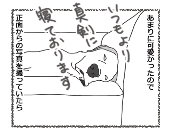 羊の国のラブラドール絵日記シニア!!「寝起きドッキリ!」2