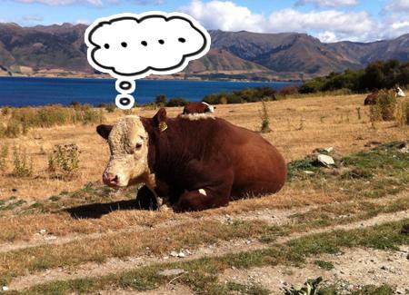 羊の国のラブラドール絵日記シニア!!「命からがら土曜日」6