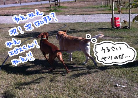 羊の国のラブラドール絵日記シニア!!「お見合いサタデー」写真4