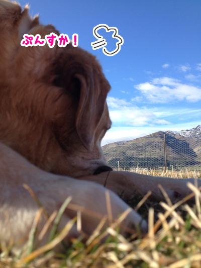 羊の国のラブラドール絵日記シニア!!「いやな予感」写真2