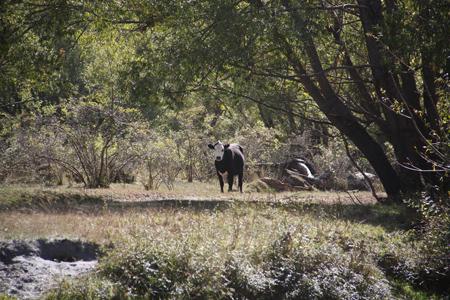 羊の国のラブラドール絵日記シニア!!「週末ピクニック」写真5