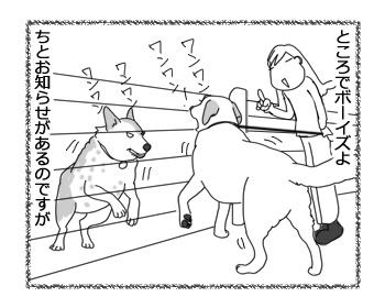 羊の国のラブラドール絵日記シニア!!「そこにフェンスがあるから」3