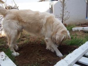 穴掘り職人4