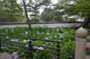 根来寺紫陽花