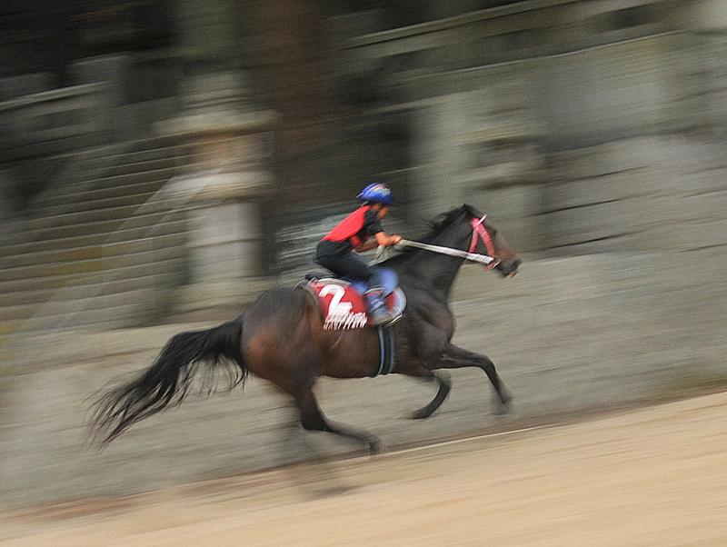 お供馬走り込み練習