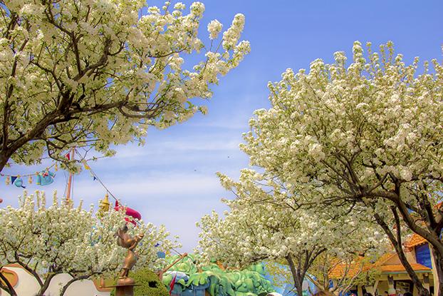 トゥーンの春1