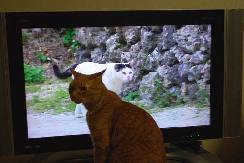メンメ ボス猫に顔をそらす