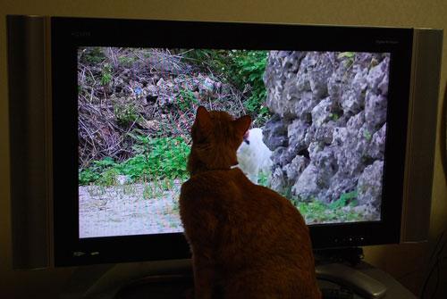 メンメ 世界猫歩き