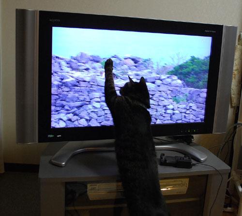 ジャンジャン世界猫歩き 手