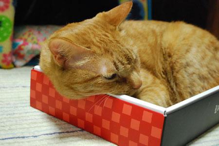 箱猫 メンメ2