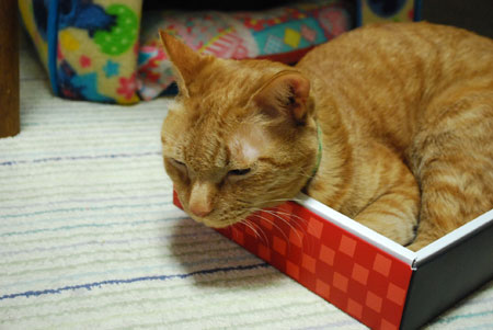 箱猫 メンメ