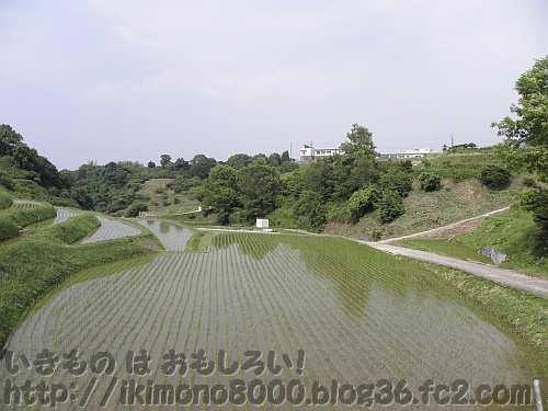 景色が映る乃東枯のころの下赤阪の棚田