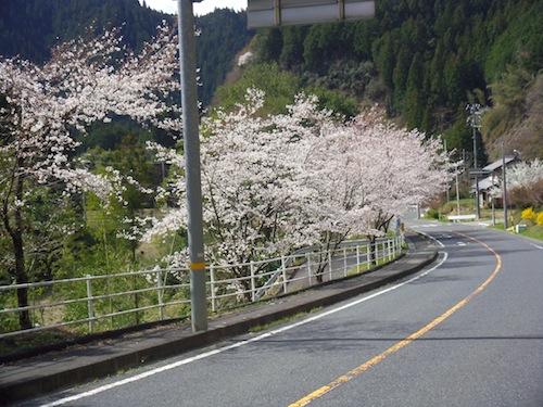 1023桜