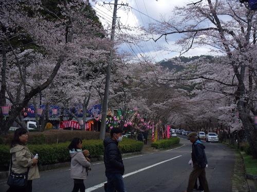 1049桜