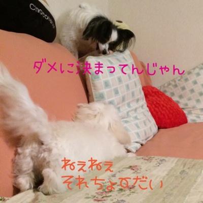 fc2blog_20140726225213912.jpg