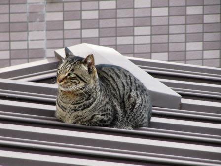 屋根の上のウスちゃん