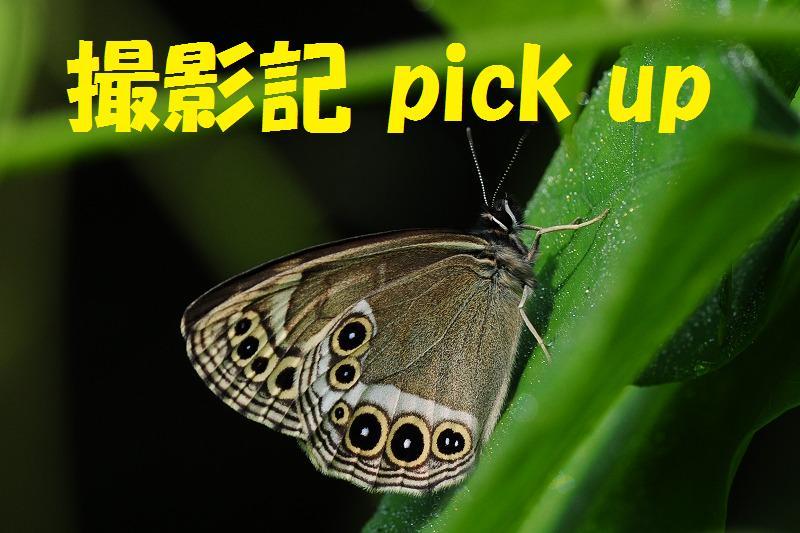 撮影記pickup1