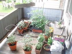 5 Porch Garden 2