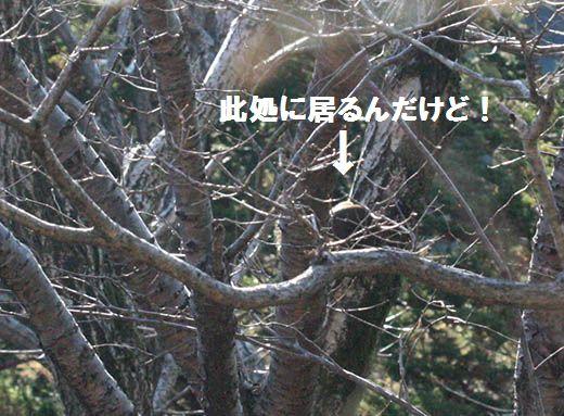 qq2187.jpg