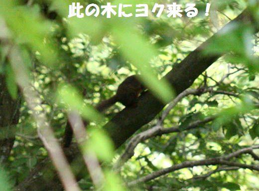 qq6389.jpg
