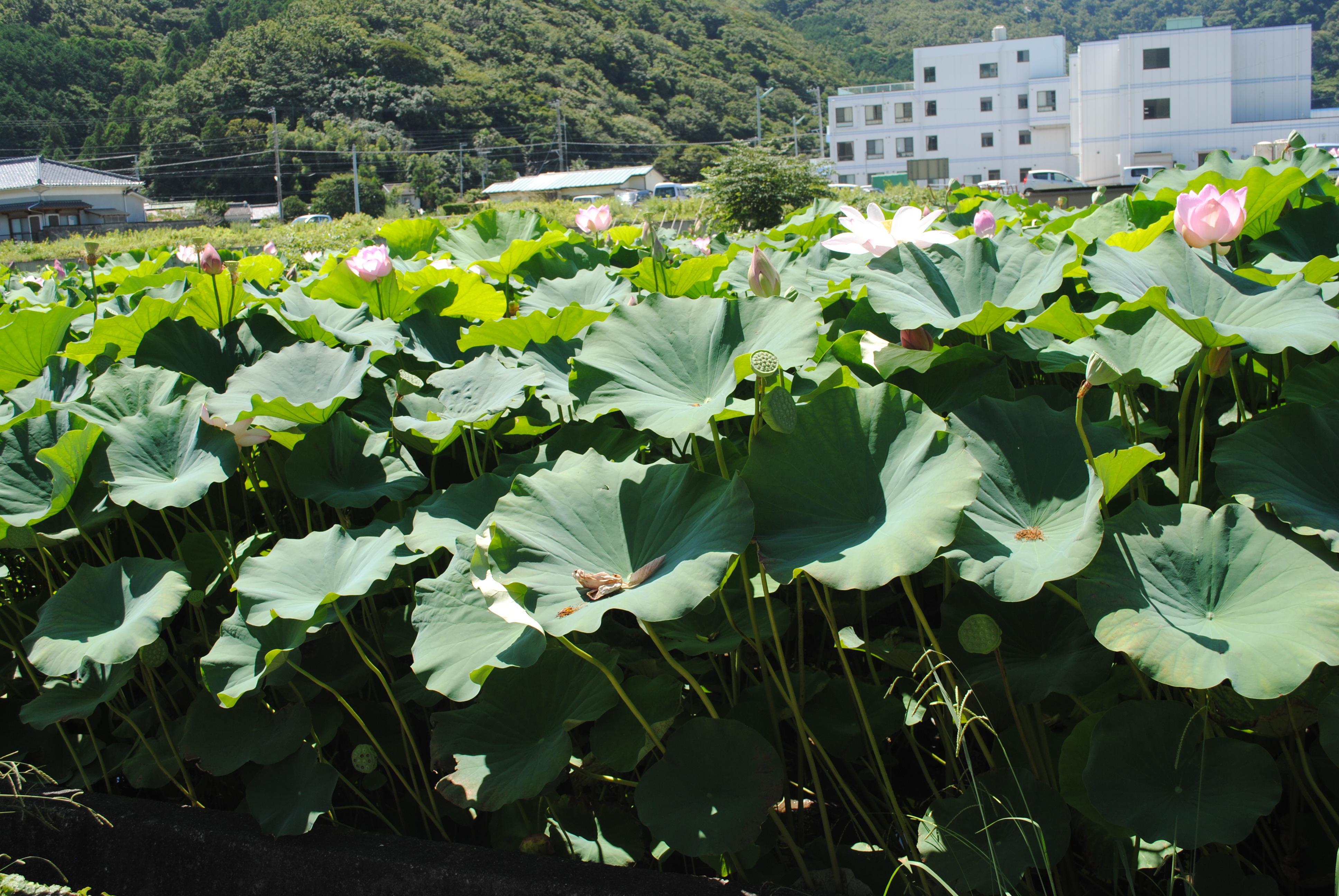 ハス見塚 (1)