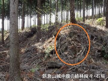編集_朝倉山城中腹植林段々の石垣DSCF2423