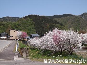 編集_DSCF2465西勝原集落から勝原城を望む